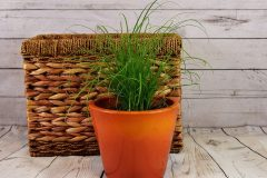 grass-plant-wood-flower-herb-soil-1192200-pxhere.com_