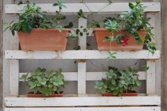plant-flower-window-balcony-green-herb-602087-pxhere.com_